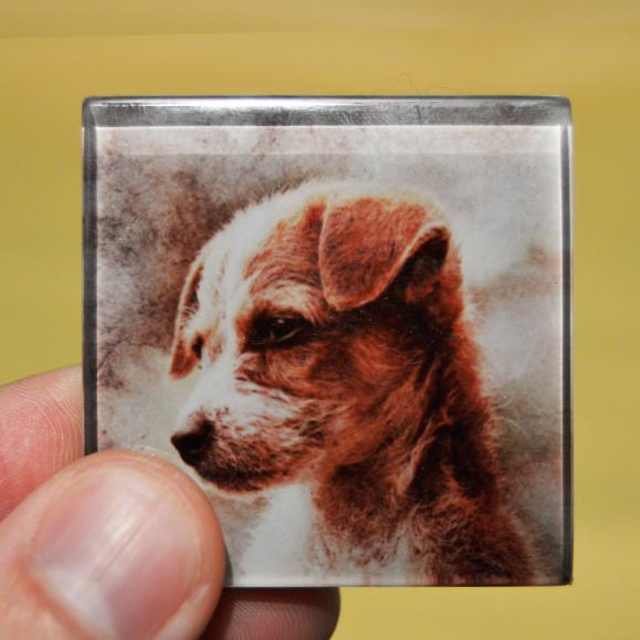 magnet chien